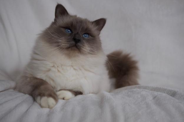 Gyönyörű kék szemek