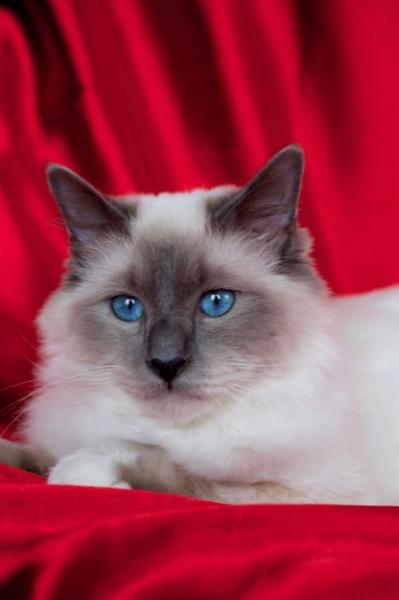 Blue eyes!!!