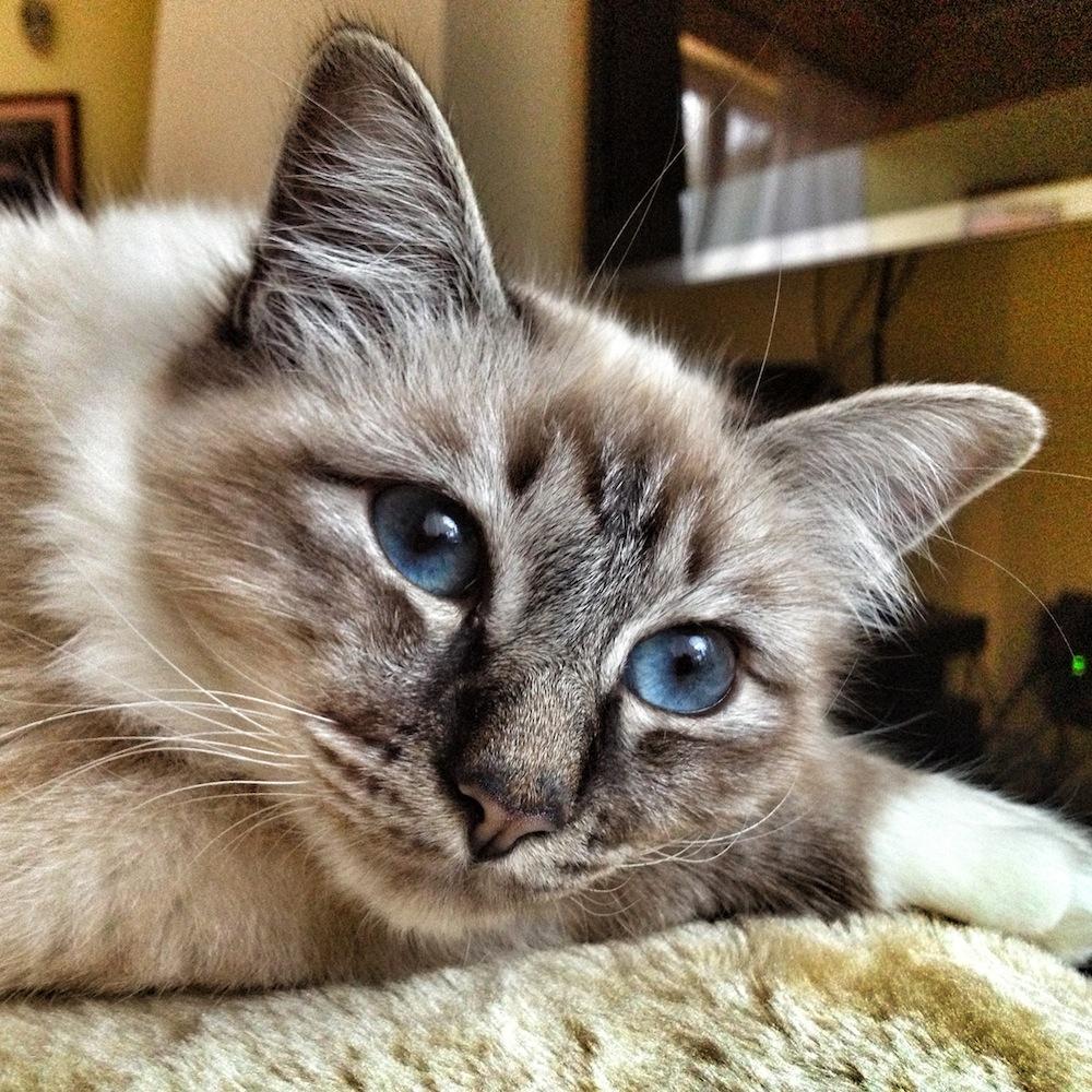 Csodaszép kék szemek