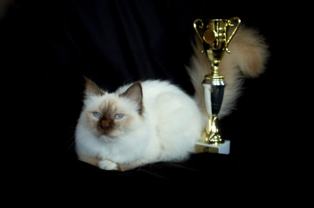 Best in show winner