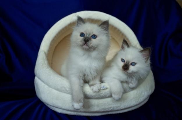 Sábacat Felice and Fluffy