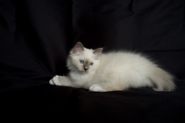 Sábacat Felice 3 months old