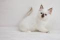 Desdemona 8 weeks old
